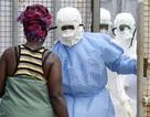 Diễn biến dịch Ebola trên khắp thế giới