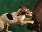 Hà Nội: 2 trường hợp tử vong do bị chó dại cắn