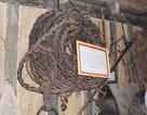 Hiến tặng bộ đồ nghề săn bắt voi rừng của dũng sĩ Ama Kông