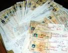 Thu giữ hàng trăm giấy phép lái xe giả từ tài xế xe khách