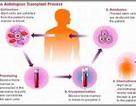 """Nhiều ứng dụng """"kinh ngạc"""" của tế bào gốc trong y học"""