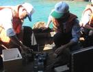 Xác định khí độc gây tử vong cho 4 thợ lặn trong khoang tàu
