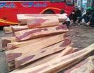 """Hai tấn gỗ trắc dạng lõi quý hiếm """"ẩn"""" trên xe khách"""