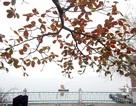 """Những """"mầm đỏ"""" trong tiết trời mưa phùn ảm đạm của Hà Nội"""