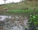 Gần 3.000 con vịt chết nghi do uống nước ô nhiễm