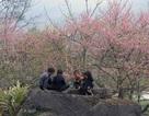 Ngắm hoa đào nở rực rỡ trên núi rừng Tây Bắc