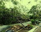 VNPT khẩn trương khắc phục hậu quả bão số 8