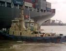 """Nghi án ba con tàu """"lạ"""" trốn thuế ở cảng Vũng Tàu"""