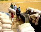 Hỗ trợ 100% lãi suất tiền vay mua gạo tạm trữ