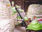 Trung Quốc tăng mua gạo Việt Nam