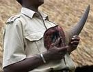 Thêm người Việt bị bắt vì nghi buôn lậu sừng tê giác