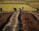 Lần đầu trong 20 năm, Triều Tiên đã có thể tự nuôi mình