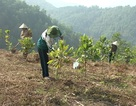 Hòa Bình: Tạo việc làm cho 70% lao động qua học nghề