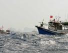 Tăng cường các biện pháp tìm kiếm thông tin 2 thuyền viên VN mất tích