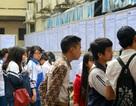 Khi lao động trẻ thiếu định hướng tìm việc