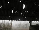 Mưa đá khủng khiếp tại Mường Khương: Bản nghèo thêm nỗi gieo neo