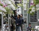 Người làng Ngọc Hà thuê đất Nhật Tân trồng hoa