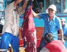 """Thử nghiệm thành công máy câu cá ngừ đại dương """"made in Việt Nam"""""""