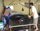 Xây chợ đấu giá cá ngừ đại dương tại Phú Yên