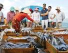 """Thương lái Trung Quốc vẫn mua cá """"chui"""" tại Nha Trang"""