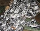 Tạm giữ trên 1.000 đôi giầy Adidas và Nike nhập lậu