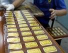 Giá vàng tăng vọt trong phiên đấu thầu 26.000 lượng vàng
