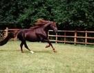 Nhẹ nhàng thú chơi ngựa tốn trăm tỷ