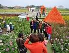 Nông dân Hà Nội bỏ tiền tỷ làm vườn thượng uyển