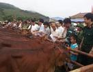 20.000 sim điện thoại đổi… 1.334 con bò giống