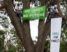 Gay cấn chuyện chặt cây trên thế giới