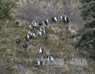 Chưa bác bỏ lỗi kỹ thuật trong vụ rơi máy bay Airbus tại Pháp