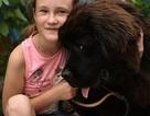 Ông Putin tặng chó Newfoundland, giúp giấc mơ của bé gái thành sự thật