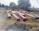 Myanmar phạt tù chung thân 153 người Trung Quốc khai thác gỗ lậu