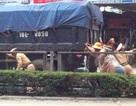 CSGT giúp dân đẩy xe chết máy giữa trưa nắng