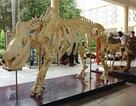 Xây Bảo tàng Thiên nhiên Việt Nam tại Hà Nội