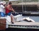 Chiến đấu với con cá mập 30 phút ở bến tàu