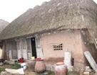 Bảo tàng lúa nước đặc biệt của một cô giáo về hưu