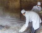 Thanh Hóa: Tiêu hủy gần 10.000 con gia cầm bị bệnh