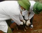 Thanh Hóa: Thêm 1 trường hợp tử vong vì bệnh dại