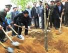 Chủ tịch nước phát động Tết trồng cây tại Thanh Hóa