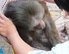 Giải cứu con khỉ mắc kẹt trên... cột điện cao thế