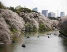 Nhật Bản sắp miễn thị thực cho du khách Việt Nam?