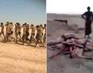 Phiến quân IS tung video hành quyết tập thể 250 bính sỹ Syria