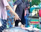 """Ngư dân Huế trúng mẻ cá """"khủng"""" gần 4 tỷ đồng"""