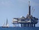Giá dầu tiếp tục sụt sâu dưới mốc 50 USD/thùng