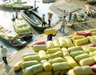 Gạo Việt đang bị cạnh tranh toàn diện