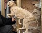 Phát hiện xác ướp mèo 400 năm tuổi