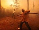 Mỹ: Cháy rừng nghiêm trọng nhất trong hơn 30 năm tại Nam Carolina