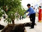 Chủ tịch nước Nguyễn Minh Triết thăm và làm việc tại Đà Nẵng