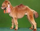 """Chùm ảnh: Chó """"cải trang"""" thành gấu trúc, lạc đà"""